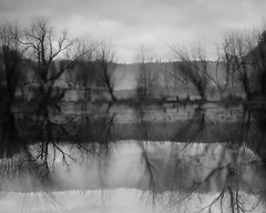 Ridgefield (Tony Pulokas) Tags: ridgefield washington ridgefieldnationalwildliferefuge winter tree tilt blur bokeh photoshop pond columbiariver reflection