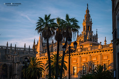 Seville Cathedral (Chiara Salvadori) Tags: travelphotography andalusia architecture building cathedral city culture europe giralda outdoors premiun sevilla seville siviglia spain spring sundown sunset town travel traveling urban