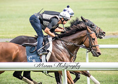 Lady Eli and Beach Patrol work (EASY GOER) Tags: horse equine racing sports thoroughbreds canon 5dmarkiii 400mm 56 belmont park races workouts
