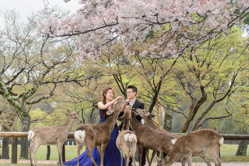 日本婚紗,京都婚紗,櫻花婚紗,婚攝守恆,新祕藝紋,cheri婚紗包套,cheri婚紗,KIWI影像基地,cheri海外婚紗,海外婚紗,DSC_5909