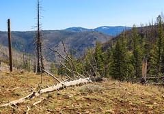 Wenaha-Tucannon Wilderness (Matthew Singer) Tags: mountains washington unitedstates hiking bluemountains pomeroy scenicviews wenahatucannonwilderness umatillanationalforest