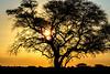 Etosha National Park, Namibia (dconvertini) Tags: africa namibia etosha