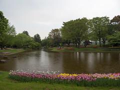 P1560095.jpg (Rambalac) Tags: flowers plant water japan pond asia вода пруд цветы tōkyōto япония растение tachikawashi азия lumixgh4
