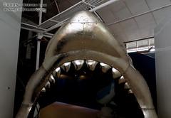 DSC_8454 (slamto) Tags: australia sydneyaquarium sydneysealifeaquarium shark