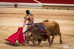Untitled (shakyphoto) Tags: green spain san europe bull bulls bullfight pamplona fermin matador