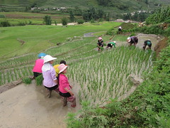 Planting season in Sapa (vbolinius) Tags: 2016 locals ricefields sapa travel vietnam