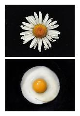 1464445273 (JIMME HANE AHMMED) Tags: jimmehaneahmmed kate labu ali photographar beautifull nice nud