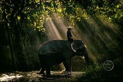 Rays on Elephant