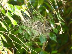 Spider Web (rpennington9) Tags: webs spiders spiderwebs tennessee chattanooga nikon nikond90
