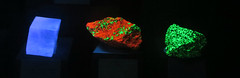 Fluorescent Rocks II (edenpictures) Tags: mineral rocks samples glowinthedark glowing tellussciencemuseum cartersville georgia crystal willemite calcite