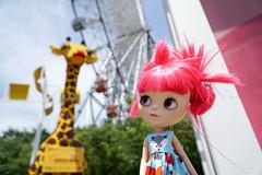 294/366 No no real Giraffe