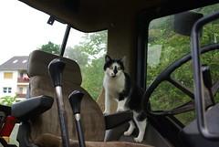 Die Treckerfahrerin (ute_hartmann) Tags: claudia katze fahrzeug trecker