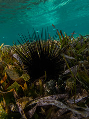 Pincushion (spencer_r_allen) Tags: park travel vacation mexico island paradise underwater snorkel olympus cancun reef urchin tough waterproof garrafon islamujeres skindiving tg4