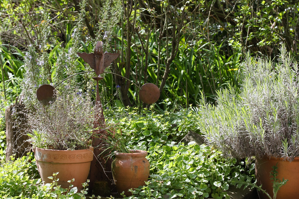 Ckuchem 9940 (christine_kuchem) Tags: Blumentopf Blumentöpfe Eisen Garten  Lavendel Naturgarten Privatgarten Rost
