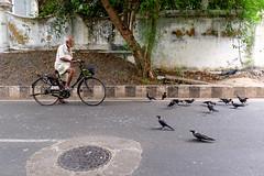 (sreeranj) Tags: pondicherry streetphotography streetphotographer street crows attack