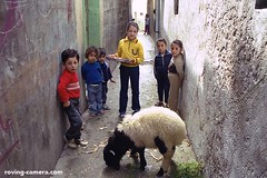 Children in Tartus, Syria (deemixx) Tags: syria tartus children sheep alley streetphotography
