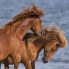 """Mane and Tail"" Shampoo and Conditioner (gimmeocean) Tags: assateagueislandnationalseashore assateagueisland assateague maryland md wildhorses horses equines beach ocean"