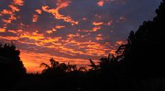 Amazing winter sunrise, Kerikeri New-Zealand (kevin2367) Tags: kerikeri nz newzealand nouvellezlande northisland northland bayofislands landscape paysage sunrise levdesoleil trees arbres palms bananier instagramkevin23230 kevinfernandez canon500d travelphotography sky clouds