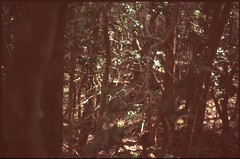 (bensn) Tags: pentax lx fa 43mm f19 limited film slide astia 100f at200 japan yamanashi woods forest trees branches light