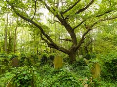 20-Highgate Cemetery East - Graves 5-1050 (md2399photos) Tags: 11aug16 dickwhittingtonscat highgatecemetery karlmarx london notesonblindness stpancras themeetingplacebypaulday