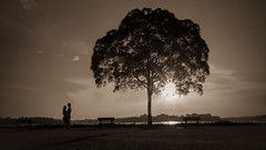Nostalgia (elenaleong) Tags: upperseletarreservoirpark backlights lonetree silhouettes elenaleong sunset sepia