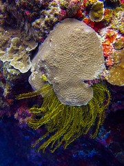 Tongo Point dive (Scott Weatherson) Tags: ocean sea nature water sport coral asia philippines dive diving cebu filipino reef saltwater moalboal tongopoint