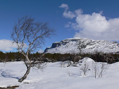 70466 Vid Naturum Laponia - Stora Sjöfallet (What about the Arctic 1) Tags: 2015 lappland naturumlaponia storasjöfallet norrbottenslän gällivarekommun sverige