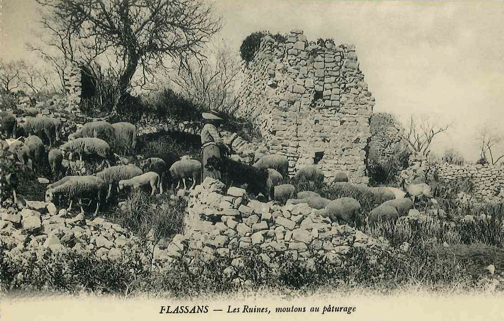 paturage_dans_les_ruines
