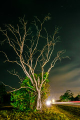 The Tree on Joel Blvd (reflectioninapool) Tags: street longexposure light sky color tree green nature vertical night clouds dark landscape outdoors us traffic unitedstates florida bare branches nobody deadtree headlight lighttrails limbs 873 lehighacres joelblvd joelboulevard