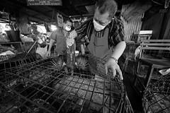 Flickr_Bangkok_Klong Toey Markey-21-04-2015_IMG_9663 (Roberto Bombardieri) Tags: food thailand market tailandia mercato klong toey