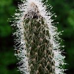 "cactus <a style=""margin-left:10px; font-size:0.8em;"" href=""http://www.flickr.com/photos/26376644@N04/17330327585/"" target=""_blank"">@flickr</a>"