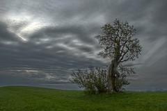 Old Tree (Erich Hochstöger) Tags: old tree clouds landscape lumix austria österreich alt wolken panasonic landschaft baum niederösterreich hdr ötscher loweraustria mostviertel fz150