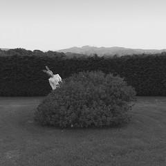 Emily serie (Pedro Daz Molins) Tags: surrealism surreal surrealist black white conceptual rabbit girl retro vintage pedro diaz molins nikon d800 chica conejo surrealismo surrealista garden jardin