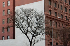 Upper West Side (TheMachineStops) Tags: 2016 outdoor tree red brick buildings architecture nyc newyourcity manhattan uws upperwestside