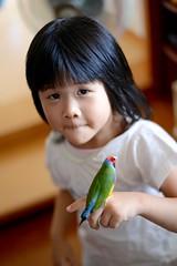 DSC_9254 (Jenny Yang) Tags: 小啾啾 小呆 小蕃茄 胡錦鳥 寵物鳥 lady gouldian finch pet bird