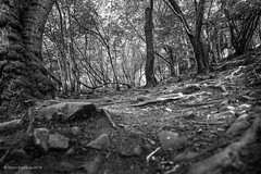 Cheddar Gorge (norm.edwards) Tags: walk woods cheddargorge gorge tonal trees texture black white blackandwhite photo rocks branches beauty lovely summer july 2016 holiday