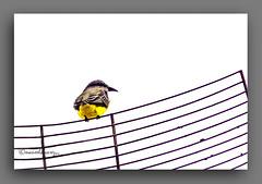 AXEXANDO. (manxelalvarez) Tags: axexando pxaro pjaros aves fauna naturaleza