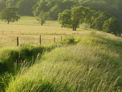 Change your thoughts and you change your world (Lancashire Lass ...... :) :) :)) Tags: fields meadows grass green trees wood fence june summer alston lancashire ribblevalley countryside landscape evening walking river