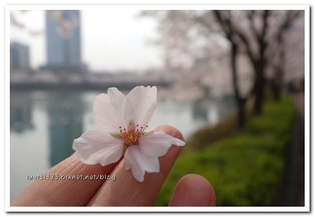 석촌호수벚꽃길13