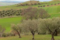 Campagna Lucana (ANNA ALESI) Tags: italy italia basilicata campagna ulivi lucania forenza acerenza