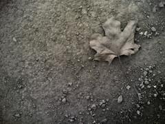 april (Sandra Lv) Tags: bw leaf ground nokia6630