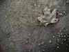 april (Sandra Löv) Tags: bw leaf ground nokia6630