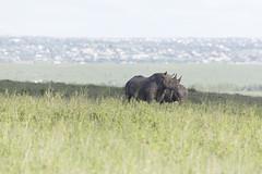 _MG_7529 (farhan1mirza) Tags: wild nature animal canon kenya wildlife 6d nnp nairobinationalpark