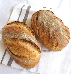Semolinabrood met sesamzaadjes (desembrood) (Levine1957) Tags: bread semolina sourdough brood desem