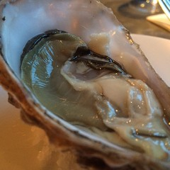 Oyster.