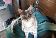 (ksparrow1216) Tags: cats feline sonya100 sonyalphadslra100