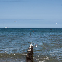 Birds (glennk2611) Tags: sun abstract beach birds children pier seaside sand waves norfolk leafs cromer