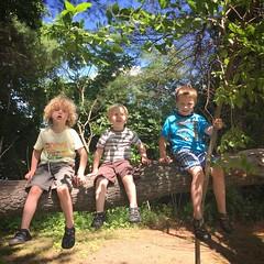 193/366 (grilljam) Tags: friends summer tree seamus hike monkeys ewan wes bff iphone 4yrs 366days 65yrs july2016