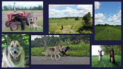 Clancy And Duke (Living life off leash) Tags: dogs forest trees pets walk pals tractors