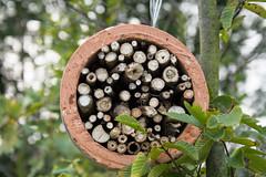 ckuchem-2933 (christine_kuchem) Tags: dose hilfe insekten insektenhotel insektennisthilfen insektenschutz naturschutz nisthilfen rohr schutz stengel selbstgemacht